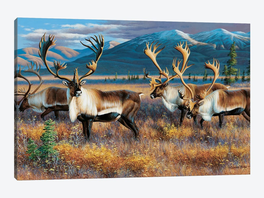 Caribou III by Cynthie Fisher 1-piece Canvas Art