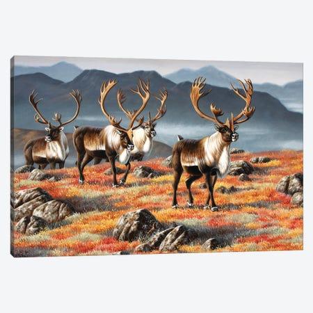 Caribou Bulls Canvas Print #CYT40} by Cynthie Fisher Canvas Art