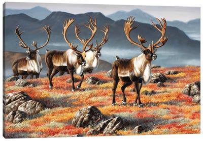 Caribou Bulls Canvas Art Print