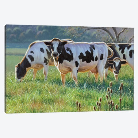 Cows Canvas Print #CYT43} by Cynthie Fisher Canvas Art