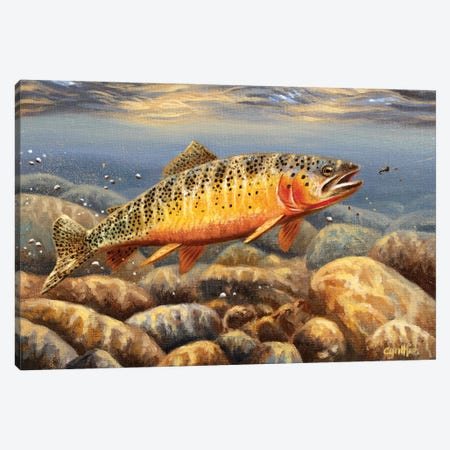 Cutthroat Trout2 Canvas Print #CYT45} by Cynthie Fisher Canvas Art Print