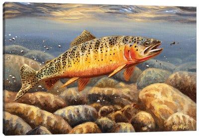 Cutthroat Trout2 Canvas Art Print