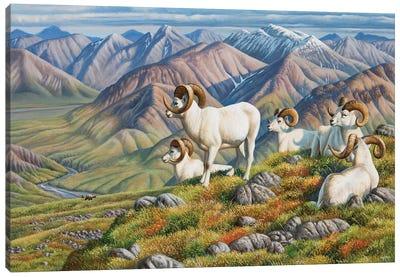 Dall Sheep Canvas Art Print