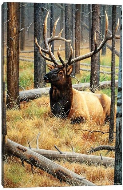 A Distant Bugle Canvas Art Print