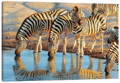Drinking Zebras Canvas Art Print