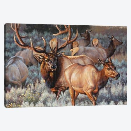 Elk I Canvas Print #CYT61} by Cynthie Fisher Canvas Artwork