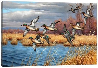 Feathered Bullets Canvas Art Print