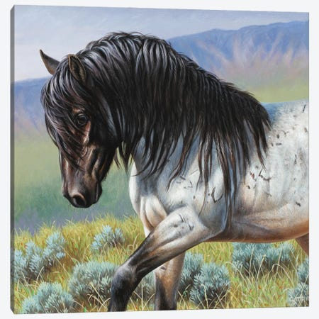 Fixed-Blue Roan Canvas Print #CYT68} by Cynthie Fisher Canvas Wall Art