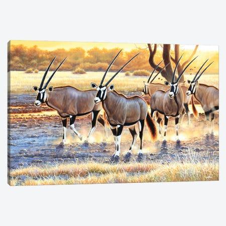 Gemsbok Herd Canvas Print #CYT74} by Cynthie Fisher Canvas Art