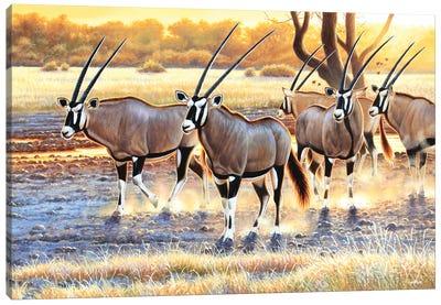 Gemsbok Herd Canvas Art Print