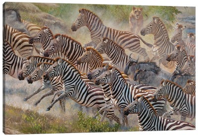 Ambush Zebras Canvas Art Print