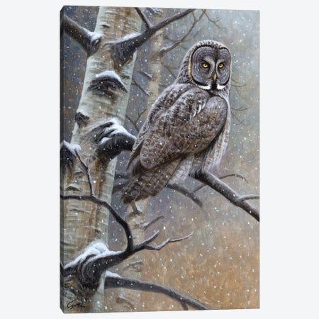 Great Grey Owl Canvas Print #CYT83} by Cynthie Fisher Canvas Artwork