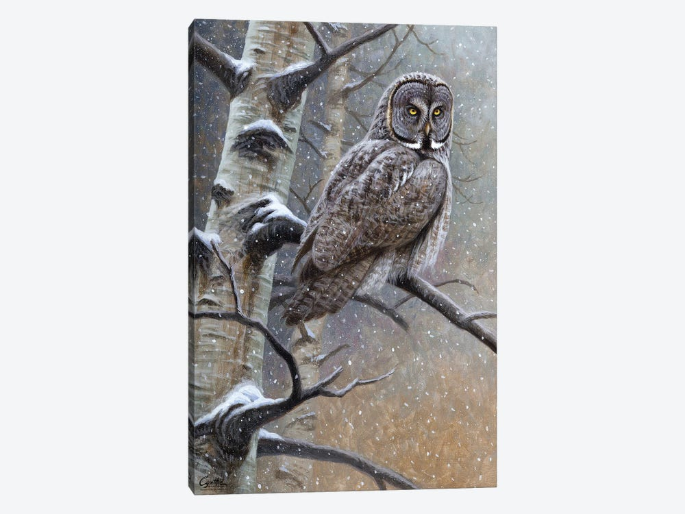 Great Grey Owl by Cynthie Fisher 1-piece Canvas Art Print