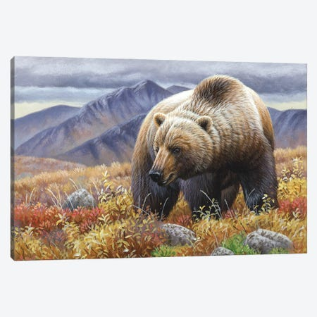 Grizzly Canvas Print #CYT88} by Cynthie Fisher Canvas Wall Art