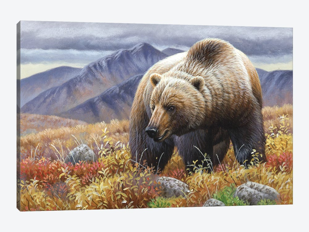 Grizzly by Cynthie Fisher 1-piece Canvas Wall Art
