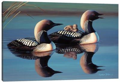Arctic Loons Canvas Art Print