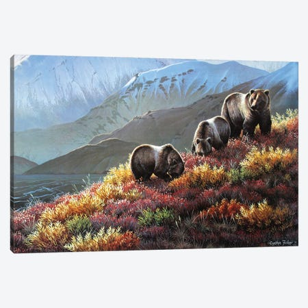 Grizzly Autumn Harvest Canvas Print #CYT90} by Cynthie Fisher Canvas Print