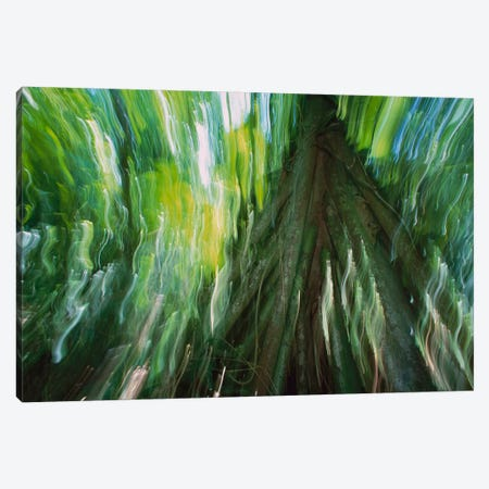 Walking Palm Showing Stilt Roots, With Abstract Rainforest Patterns, Barro Colorado Island, Panama Canvas Print #CZI11} by Christian Ziegler Canvas Artwork