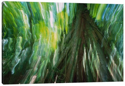 Walking Palm Showing Stilt Roots, With Abstract Rainforest Patterns, Barro Colorado Island, Panama Canvas Art Print