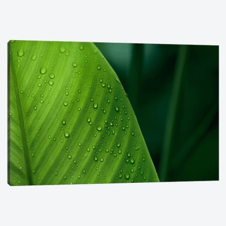 Leaf With Water Drops, Barro Colorado Island, Panama Canvas Print #CZI7} by Christian Ziegler Art Print