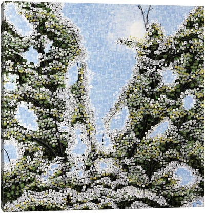 Looking Through The Branches Canvas Art Print