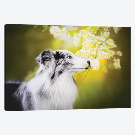 Spring Sniffing Canvas Print #CZU102} by Cecilia Zuccherato Canvas Wall Art