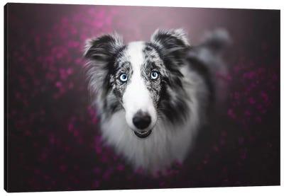 Bonnie In Heather Canvas Art Print