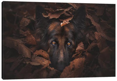 Camouflage Canvas Art Print