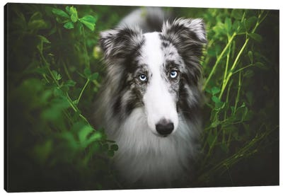 Green Mood Canvas Art Print