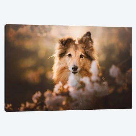 Lana In Cherry Blossom I Canvas Print #CZU125} by Cecilia Zuccherato Canvas Print