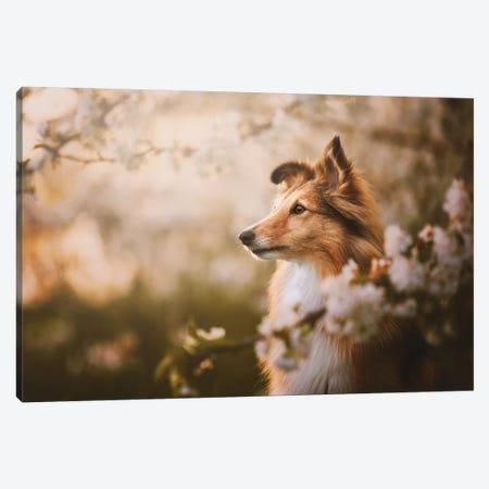 Lana In Cherry Blossom III Canvas Print #CZU127} by Cecilia Zuccherato Art Print