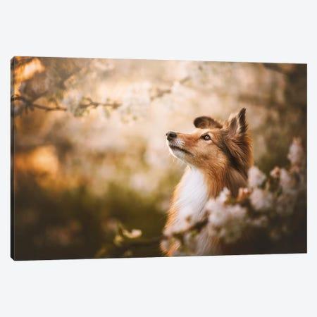 Lana In Cherry Blossom IV Canvas Print #CZU128} by Cecilia Zuccherato Canvas Art
