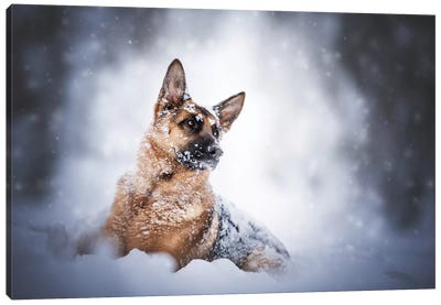 Winter Mood Canvas Art Print