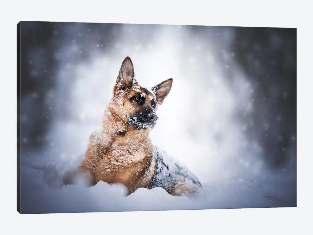Winter Mood by Cecilia Zuccherato 1-piece Canvas Wall Art