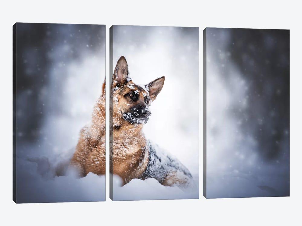 Winter Mood by Cecilia Zuccherato 3-piece Canvas Artwork