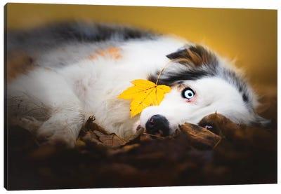 Autumn Laziness Canvas Art Print