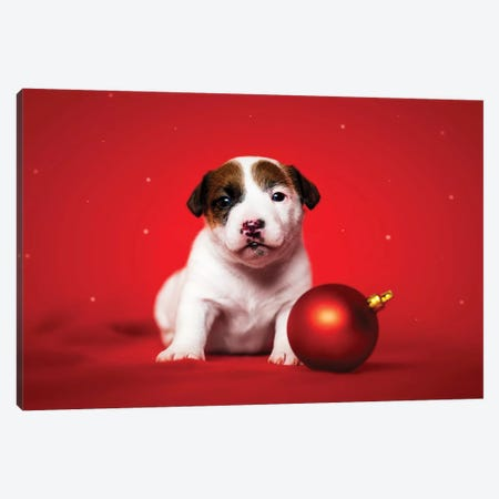 Christmas Puppy Canvas Print #CZU36} by Cecilia Zuccherato Art Print