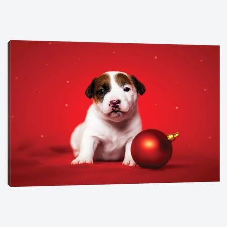 Christmas Puppy Canvas Print #CZU36} by Cecilia Zuccherato Art Print