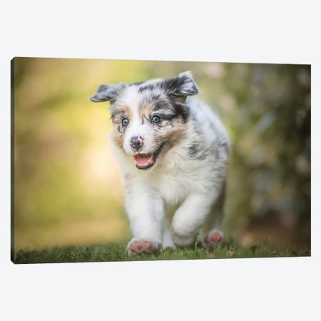 Cuteness Overload Canvas Print #CZU39} by Cecilia Zuccherato Canvas Artwork