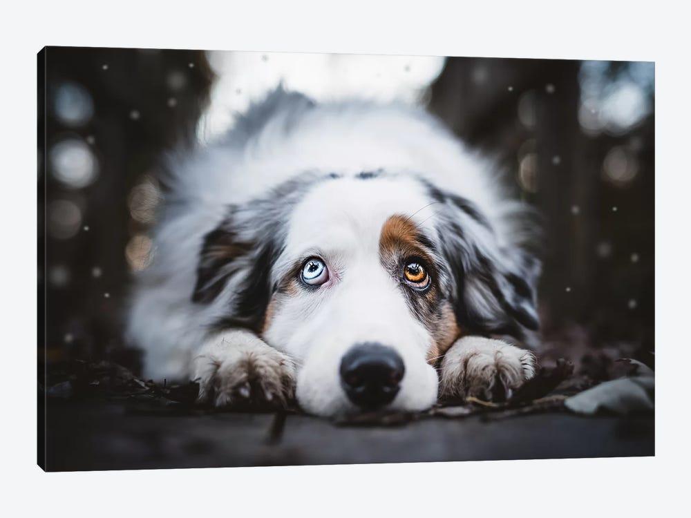 First Snowfall by Cecilia Zuccherato 1-piece Art Print
