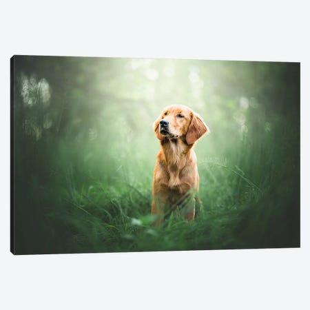 Green Mood Canvas Print #CZU49} by Cecilia Zuccherato Art Print