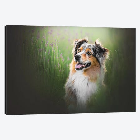 Tess In Lavender Canvas Print #CZU4} by Cecilia Zuccherato Canvas Art