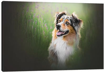 Tess In Lavender Canvas Art Print