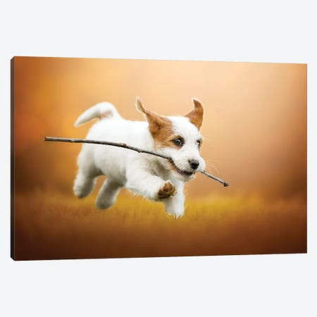 Happiness Is Running With A Stick Canvas Print #CZU52} by Cecilia Zuccherato Canvas Wall Art