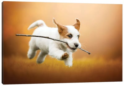 Happiness Is Running With A Stick Canvas Art Print