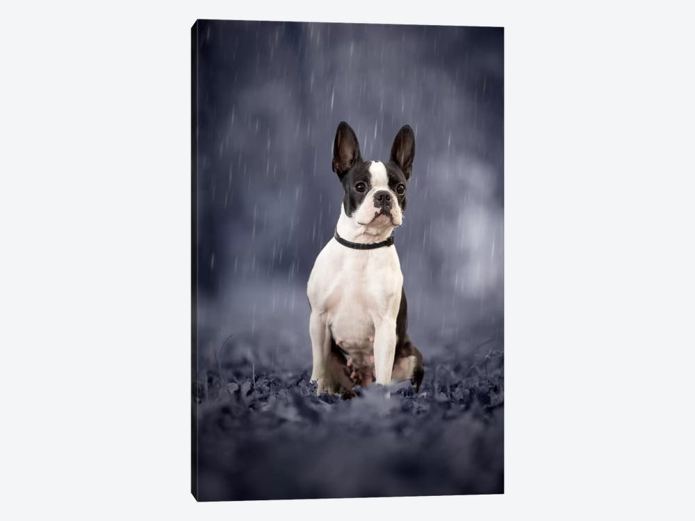 In The Rain by Cecilia Zuccherato 1-piece Canvas Art