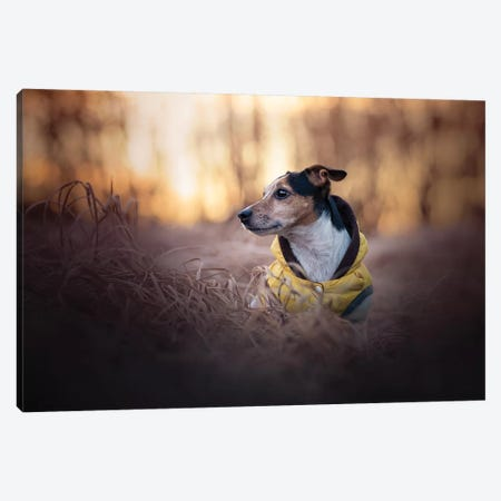 Jerry Inverno Canvas Print #CZU67} by Cecilia Zuccherato Canvas Art