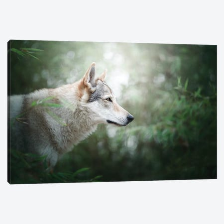 The Wolfdog Canvas Print #CZU6} by Cecilia Zuccherato Canvas Artwork