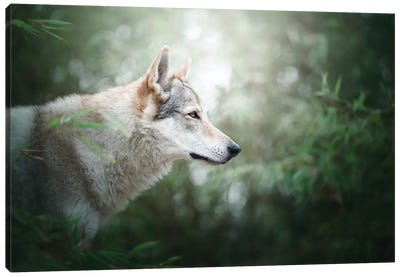 The Wolfdog Canvas Art Print