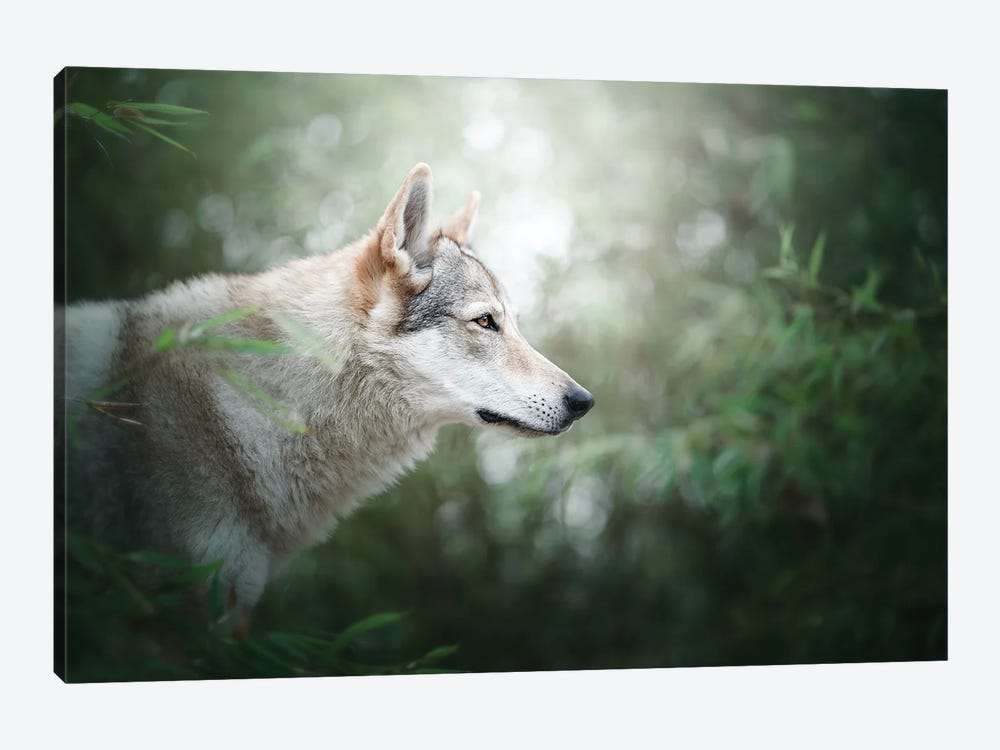 The Wolfdog by Cecilia Zuccherato 1-piece Canvas Print
